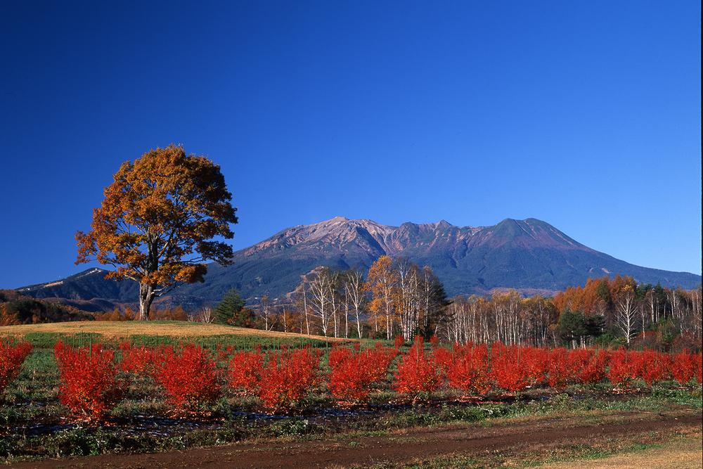 10月下旬に見頃を迎える長野県内の紅葉スポットをご紹介します。長野県は南北に広く、標高差もあることから、長い間紅葉を楽しむことができます。見頃の時期をチェックして、素晴らしい紅葉に会いに来てく…